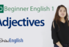 Beginner Adjectives